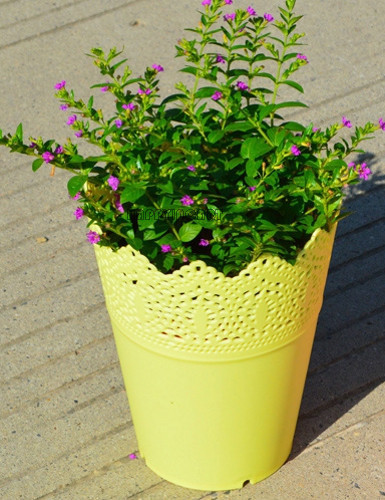 Yellow cute plastic potted home garden solid mini plants flower pot yellow cute plastic potted home garden solid mini plants flower pot hollow out lace crown office mightylinksfo