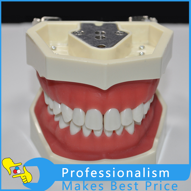28 Pcs Standard Teeth Simulation Dental Model Removable Tooth Model Used For Dentist free shipping skull model 10 1 extraoral model dental tooth teeth dentist anatomical anatomy model odontologia