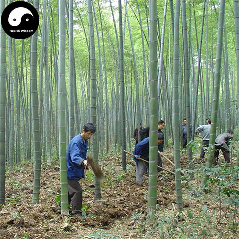 Top Detail Feedback Questions about Buy Real Bamboo Tree Semente @XD_34