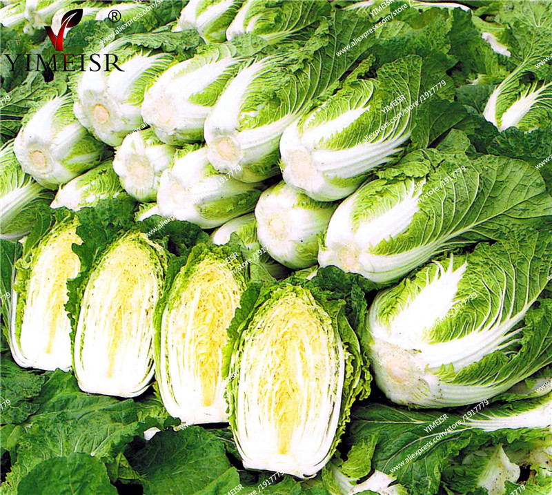 Chinese Cabbage Seeds Michihili Cabbage Chinese Vegetable seeds Outdoor balcony plant seeds for Home Garden 200pcs/bag