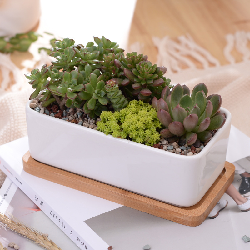 1 Set Minimalis Rectangle White Ceramic Succulent Plant Pot Porcelain Desktop Flower Pot Zakka Home Decor (1 Pot + 1 Tray)