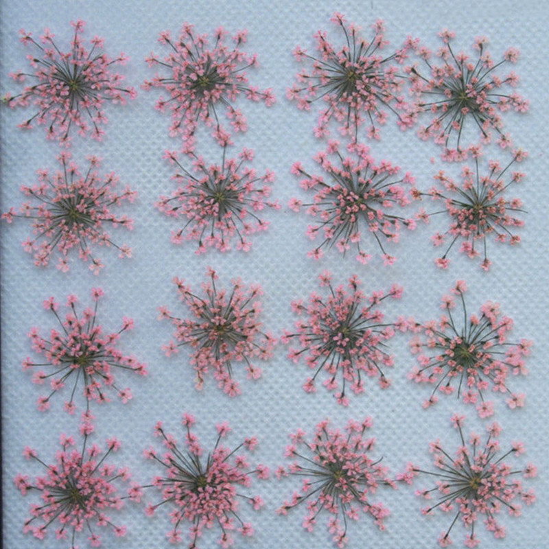 Bulk Packing Pink Lace Flower 1000pcs Dry Flower Press Flower For Candle Decoration Diameter 2-2.5CMBulk Packing Pink Lace Flower 1000pcs Dry Flower Press Flower For Candle Decoration Diameter 2-2.5CM