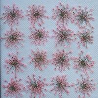 Bulk Packing Pink Lace Flower 1000pcs Dry Flower Press Flower For Candle Decoration Diameter 2 2.5CM