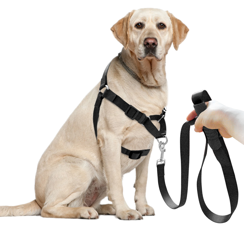 Stop My Dog From Biting The Leash
