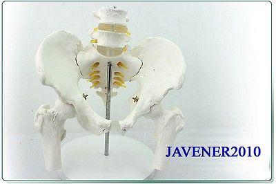 1:1 Human Anatomical Pelvis Lumbar Vertebra Medical Model Leg Bones +Stand