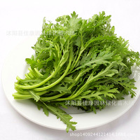 vegetable plant Chryplantanthemum chryplantanthemum diplanth with tarragon and baplantil germination rate real planthot 200g