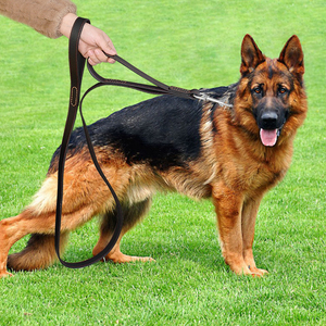 Image 5 - Geniune 革ペット犬リーシュロープペット K9 トレーニングウォーキングリードリーシュコード中大犬クイック制御 2 ハンドル