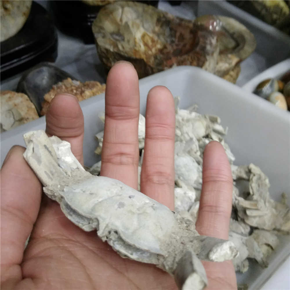 Wholesale Natural Crab Fossil Healing Energy Collect An Artwork For Home Decoration ZXW