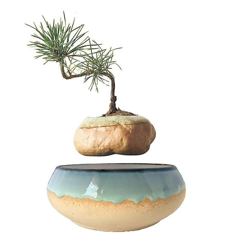 Order Floating Bonsai