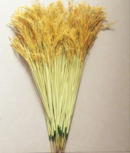 """10Pcs 70m/27.56"""" Artificial Yellow Rice Grass Plastic Natural Looking Rice Plants Paddy for Home Table Decorative Plant"""