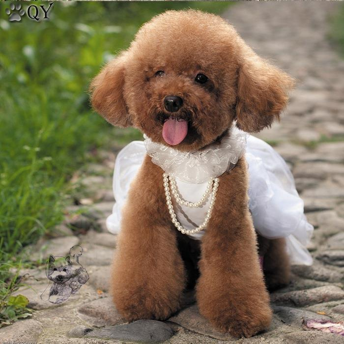 Pet Dress For Dogs Clothes Clothing Puppy Arel Lace Flower Princess Beading White Pink Dog Wedding Xs Xl In Dresses From Home