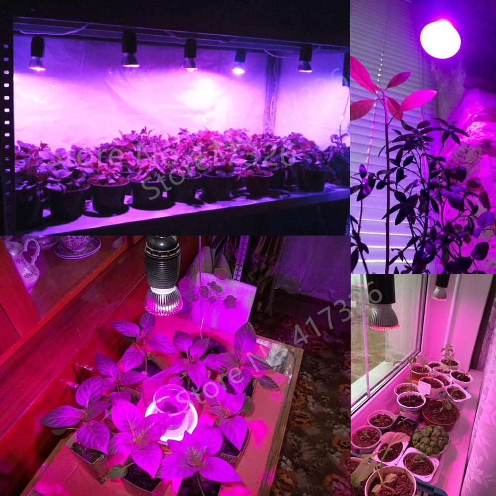 Levou Crescer Luzes v 265 v lâmpada crescimento País de Origem : Guangdong, china(mainland)