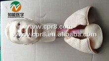 BIX-H70/4B Nasogastric Tube Nursing Head Model With Lung Model  MQ174