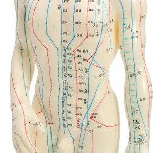 """Image 4 - """"Menselijk Lichaam Acupunctuur Model Mannelijke Meridianen Model Grafiek Boek Base 50Cm"""