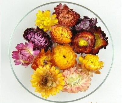 Сухие цветные хризантемы, Натуральные Сушеные головки цветов, центральные части свадебных цветов, консервированные цветы, 6 шт.
