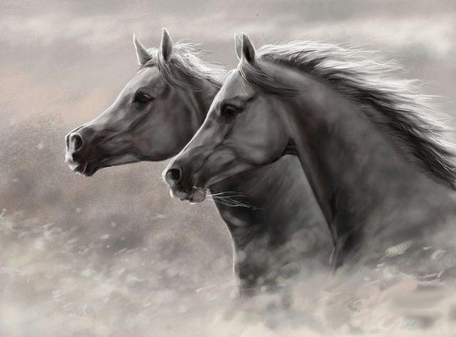 распечатать картинки лошадей