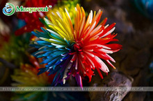 100PC Rainbow Chrysanthemum Flower Seeds, Ornamental Bonsai, Rare Color ,New Choose More Chrysanthemum Seeds Garden Flower Plant