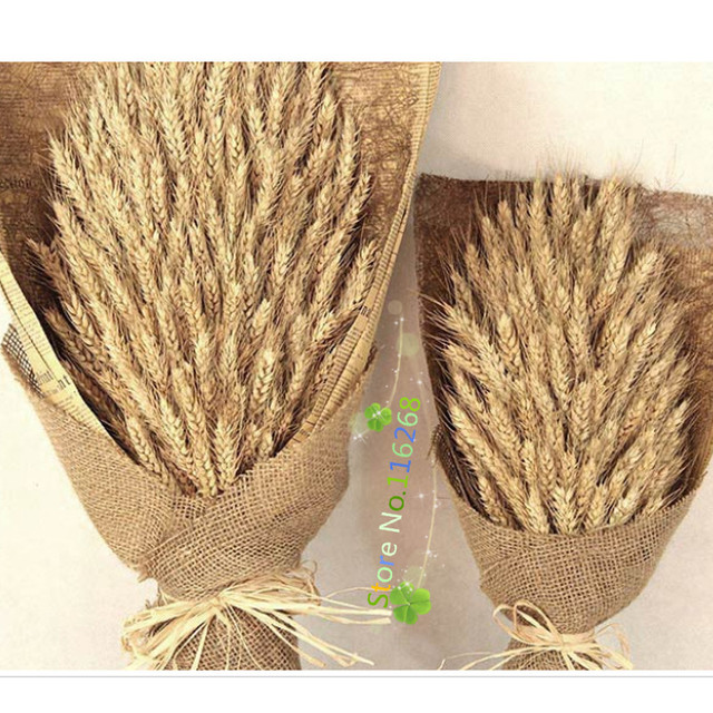 1 pack shooting props rice ear of wheat wedding decoration 1 pack shooting props rice ear of wheat wedding decoration artificial scrapbooking flowers photographic furnishing articles junglespirit Gallery