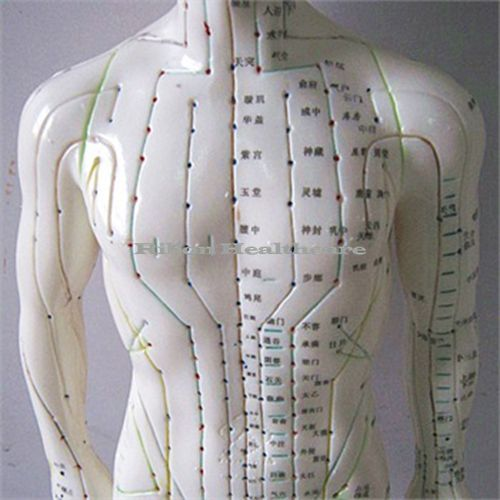 Free shipping meridians model male human body acupuncture point.
