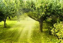 Laeacco Fruit Forest Gradient Bright Beam Scenic Photography Backgrounds  Customized Photographic Backdrops For Photo Studio