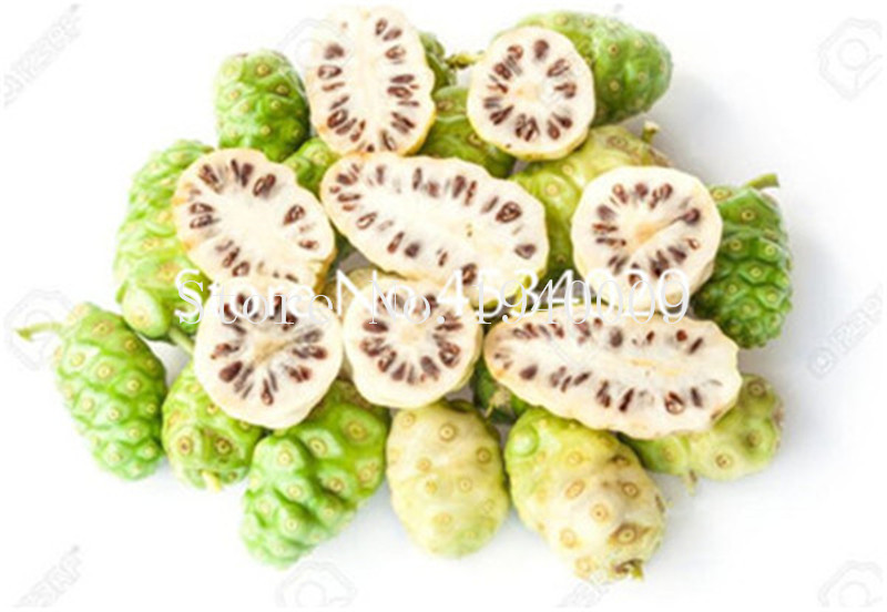 100 Pcs Delicious Fruit Bonsais Morinda Citrifolia Tree Bonsai Balcony Sweet Fruits Vegetables Potted Bonsai For Home Garden