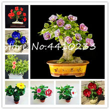 100 Pcs Rainbow Dwarf Hibiscus Bonsai Flower Plants Chinese Diy Plant Hibiscus Plants Gift For Your Kids Easy Grow Home Garden(China)