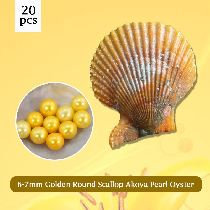 AAA Golden Pearls Oysters, 6-7mm Round Pearl in Scallop Akoya Oyster Wholesale 20pcs,Free Shipping PJW284 цена и фото
