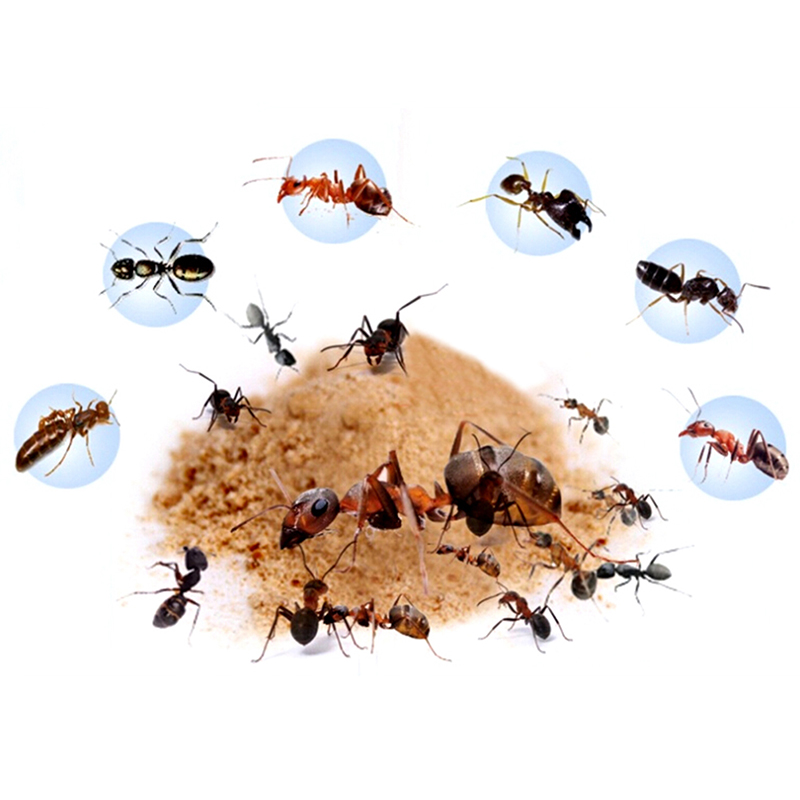 12pcs/lot Ant Killing Powder Bait Ants Repellent Repeller Trap Killer Pest Control Destroy Ant Colony Poison Kill Baits(China)