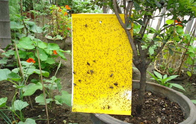 10Pcs Fly Trap Sticky Board For Moths Mosquitoes Flying Insect Flies Termites Bugs Control Out Door Use Waterproof Non Toxic On Aliexpress