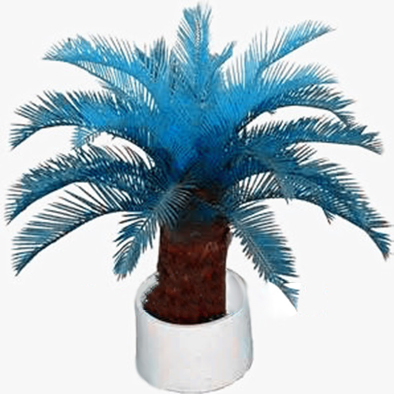 New Arrival 10 pcs blue Cycas, mini Sago Palm Tree .bonsai flower, budding rate 97% rare room potted plant for home garden vacation