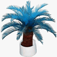 New Arrival 10 pcs blue Cycas, mini Sago Palm Tree .bonsai flower, budding rate 97% rare room potted plant for home garden(China)