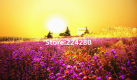 Needlework Lavender Field Scenery For Embroidery Unprinted DIY DMC Cross Stitch Kits Art Pattern Counted Cross