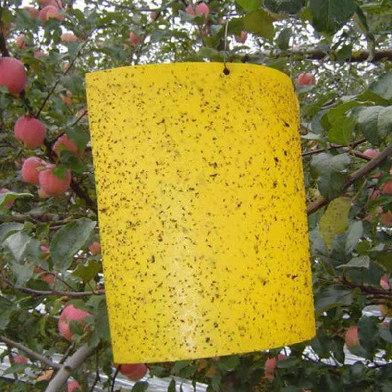 Sterke Vliegt Vallen Bugs Opknoping Sticky Board Catching Bladluis Insecten Pest Killer Outdoor Fly Trap Ongediertebestrijding Lijm Papier