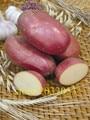 bonsai potato red skin home garden vegetable