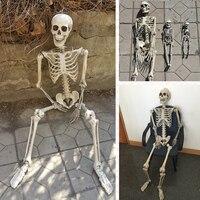 Набор из 4 человек Скелет см 165 см 90 см 40 см 30 см Хэллоуин скелет 100% пластиковый скелет для хэллоуина украшения