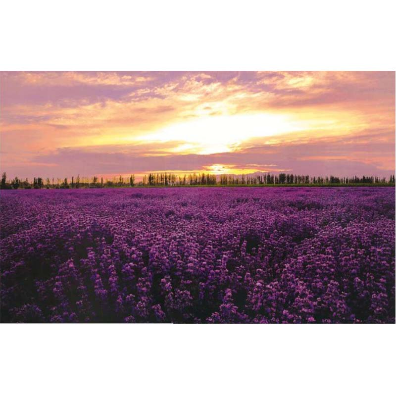 Purple lavender field Wooden Puzzle 1000 pieces Landscape Puzzle New Arrival Adults 1000 Piece Wooden jigsaw Educational Toy D