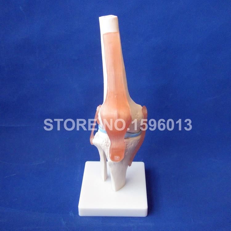 Humano caliente serie conjunta modelo humano, hombro, codo, cadera ...