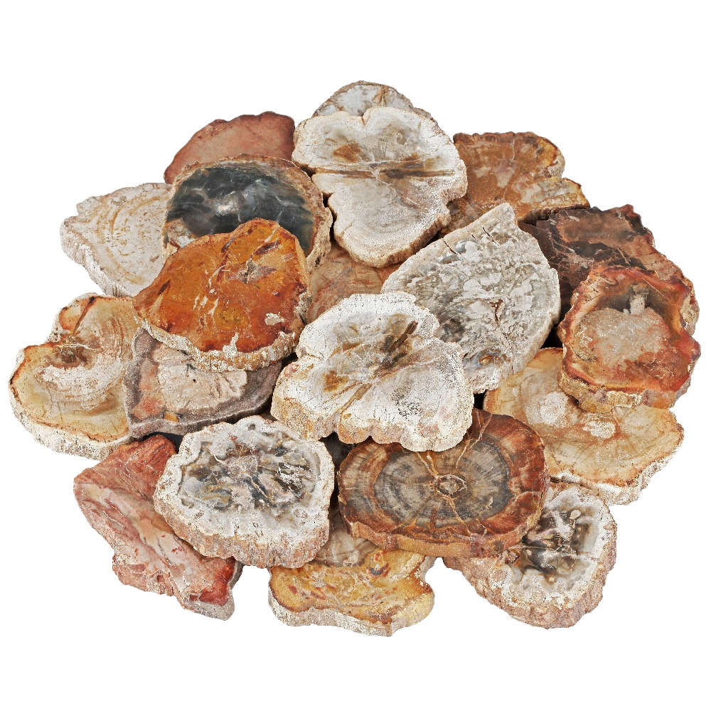 TUMBEELLUWA 1Lot 5Pc Natural Irregular Petrified Wood Stone Slice for Healing Crystal Jewelry Making in Jewelry Packaging Display from Jewelry Accessories
