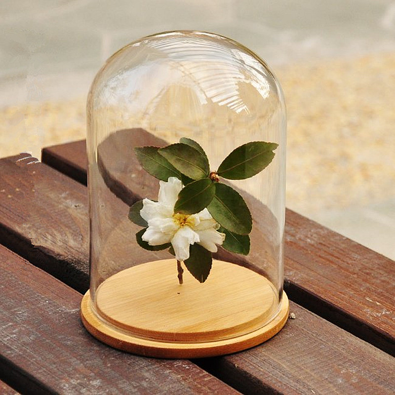 Natural Preserved Flowers Large Gl Dome Cap With Wood Base Home Decor Wedding Decoration Vase Gift Lower Vases New In Bottles