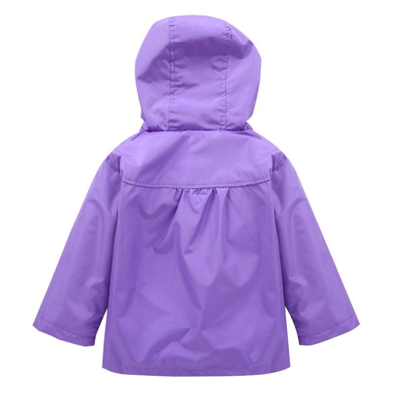 C004 purple (2)