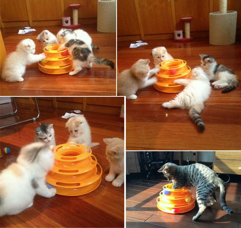 Cat Spiral Toy