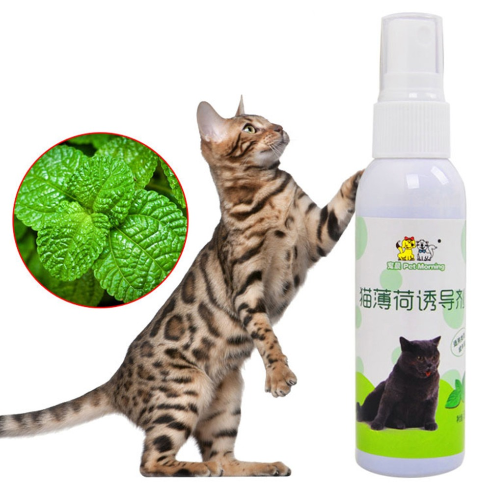 Cat Catnip Pet Training Toy Natural Healthy Cat Mint Funny Scratch Toy Spray UHJSD