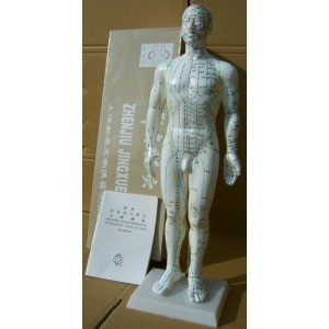 50CM English human acupuncture meridian points model male or female acupoint model with user manual free shipping