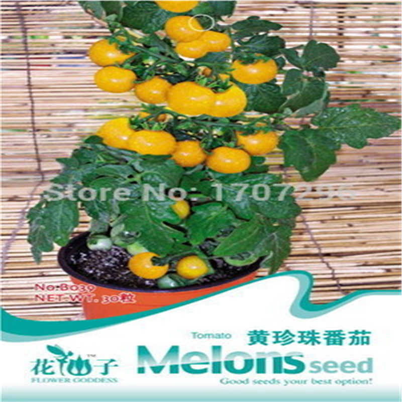 Wholesale Choi bags balcony potted flower seed,Yellow pearl tomato Seeds about 30 particles