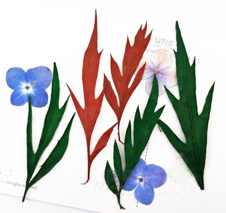Feuille D Eucalyptus Bouquet €15.04 20% de réduction|120 pièces séché pressé feuilles d'eucalyptus pour  la fête de mariage maison pendentif collier artisanat bricolage bouquet