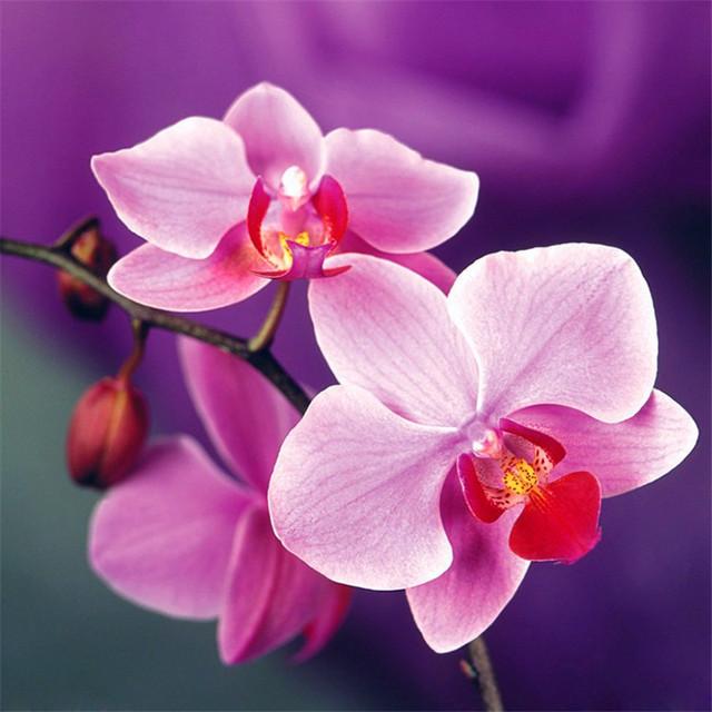 Indoor Balcony Office Rare Orchid bonsais Phalaenopsis Orchid Bonsai Pot new arrival DIY home garden plants Flowers bonsai 5pcs