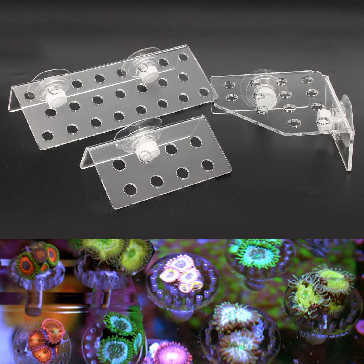 3 Types Acrylic Aquarium Plus Coral Rack Stand Bracket