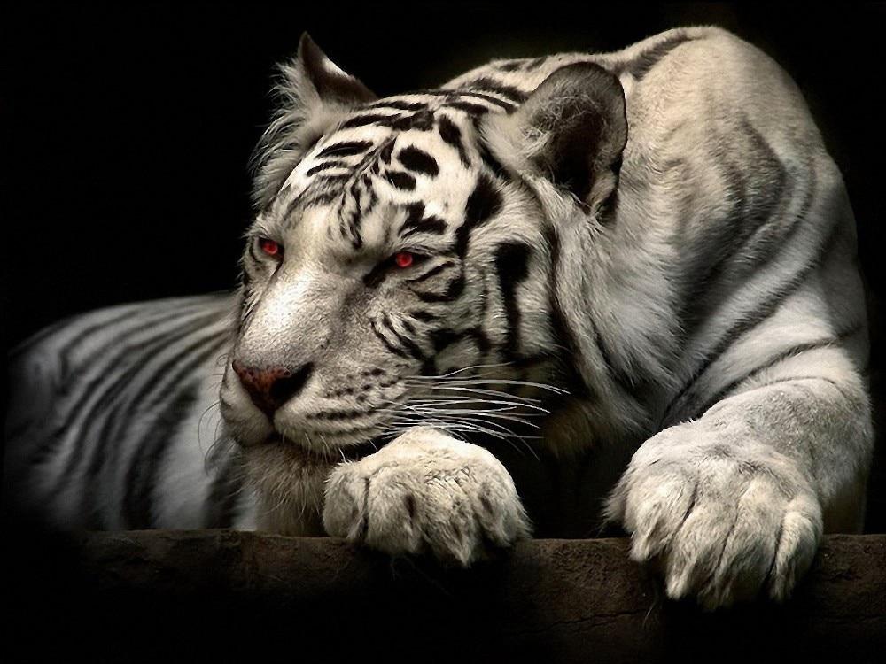Grandi animali immagini acquista a poco prezzo grandi animali ...