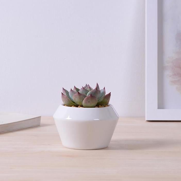 creativo de cermica blanca planter suculentas escritorio superior con forma circular macetas bonsai zakka mini macetas