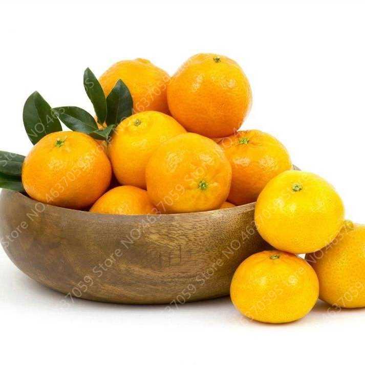Murah 100 Pcs/bag Dimakan Jeruk Buah Mandarin Pohon Bonsai Jeruk Pot Tanaman Taman Mini Juicy Taman Manis Orange Sementes